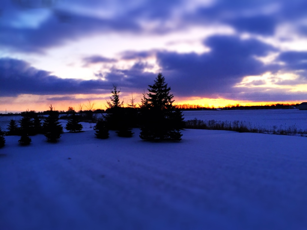photograph of spruce trees against the horizon at sunset; there is snow on the ground, and the sky is full of clouds